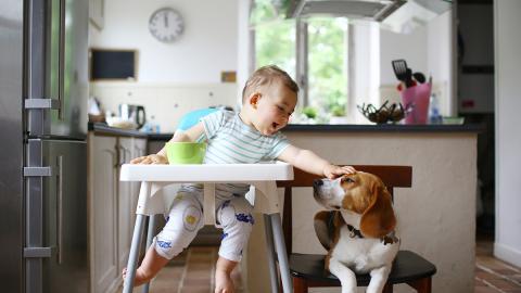 Bereits als kleiner Junge: Dieser Mann wollte schon immer als Hund leben
