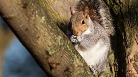 Mann fotografiert Eichhörnchen, doch ein Detail macht ihn betroffen