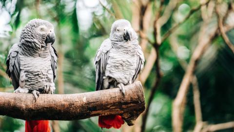 Schlagfertiges Wortgefecht: 5 Papageien bringen Zoo in peinliche Situation