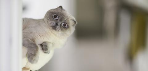 Katze hält Frauchen mehrere Tage lang in eigener Wohnung gefangen