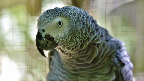 Sprachgenie? Papagei kehrt nach vier Jahren zurück und ist plötzlich ganz anders