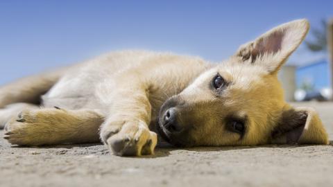Hund geht im Urlaub verloren, dann bekommen Besitzer plötzlich ein ungewöhnliches Foto