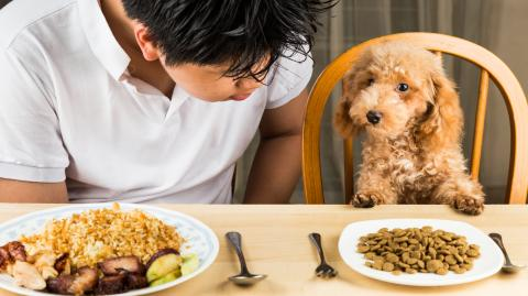 Darum wartet dieser Hund jedes Mal, bevor er zu fressen beginnt