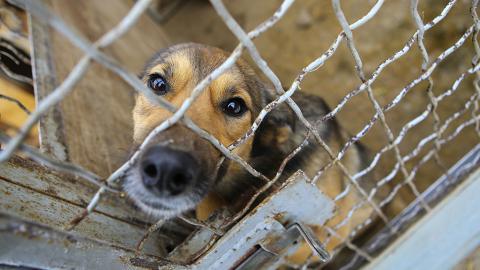Tier-Adoption: Was du vor dem Besuch im Tierheim wissen musst!