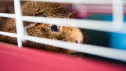 Animal Hoarding: So kannst du Tiere in Not retten!
