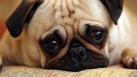 Tierärzte sind ratlos: In Norwegen tötet eine Epidemie zahlreiche Hunde