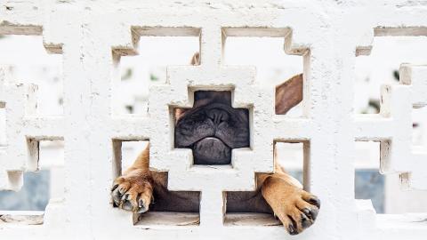 Darum sollte es dich alarmieren, wenn dein Tier seinen Kopf gegen die Wand drückt