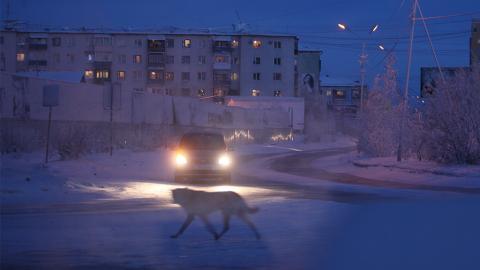 Russische Influencerin fordert ihre Fans dazu auf, Tiere zu überfahren