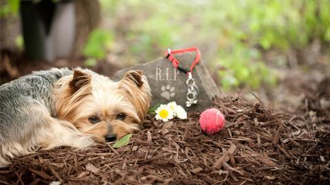 So verarbeiten Haustiere den Tod eines anderen Tieres