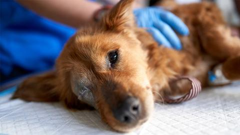 PACT-Gesetz: Tierquälerei in USA jetzt ein nationales Verbrechen