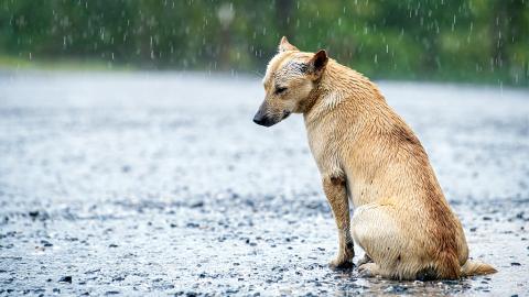 Tierheime offenbaren: Bei diesen Aussagen von Besitzern wurde ihnen übel