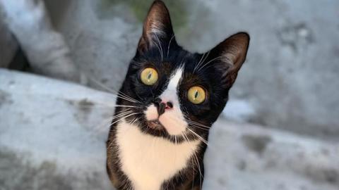 Für eine dreibeinige Katze: Er fährt 20 Stunden lang und setzt seine Ehe aufs Spiel