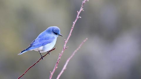 Klimawandel: Vögel schrumpfen um 2,4 Prozent