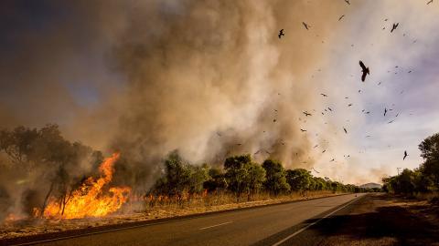 Bei Buschbränden in Australien sind bisher fast eine halbe Milliarde Tiere gestorben