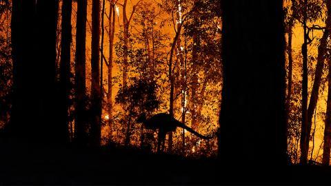 Ökologe warnt: Zahl der toten Tiere in Australien sei bedeutend höher als bisher geschätzt