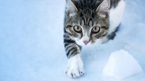 Katze leidet an schrecklichen Erfrierungen, dann wird sie mit dem 3D-Drucker gerettet