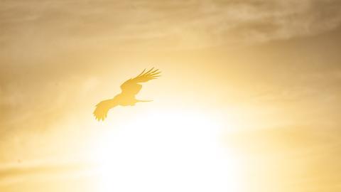 Wegen Abholzung: Die Fortpflanzung des mächtigsten Raubvogels Amerikas reicht nicht mehr aus, um ihn am Leben zu erhalten