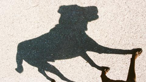 """Problem """"Schattenhunde"""": Tierschützer warnen vor überfüllten Tierheimen"""