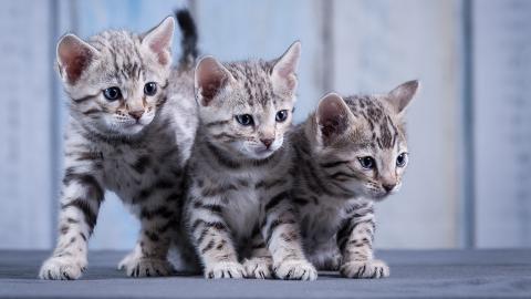 Rührende Aktion: Mann rettet drei Katzen mit Kaffee (Video)