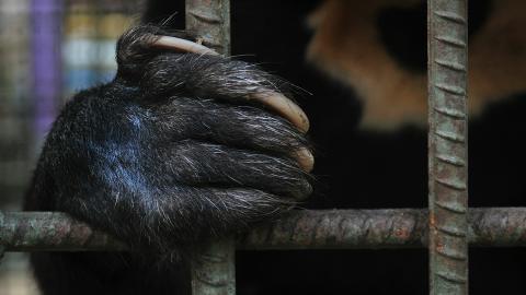 So profitieren chinesische Wildtiere jetzt vom Ausbruch des Coronavirus