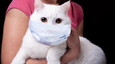 Ausnahmefall: Erste Katze hat sich bei Besitzerin mit COVID-19 infiziert