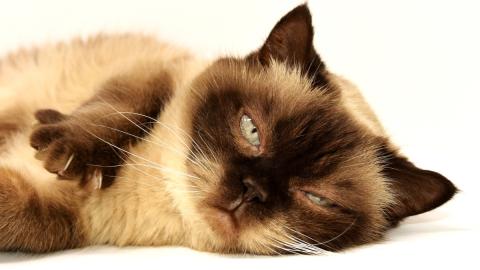 Kleine Diven: Aus diesem Grund zeigen Katzen uns oft die kalte Schulter