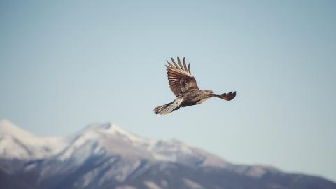 Originelle Quarantäne-Beschäftigung: Mit Vögel-Webcams zur Entspannung