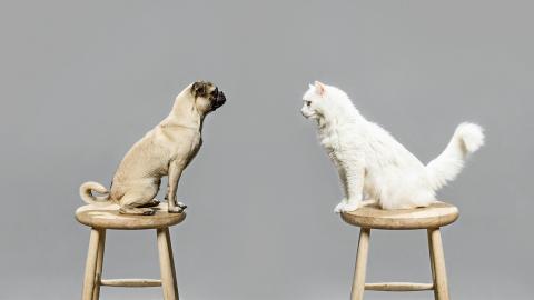 Katze vs. Hund: Dieses Haustier ist intelligenter