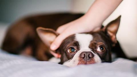 So streichelt ihr euren Hund am besten, um ihm eure Liebe zu zeigen
