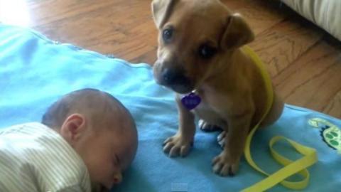Er will das Baby unbedingt beschützen, doch Etwas ist stärker als der kleine Hund