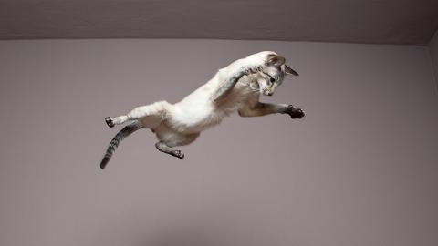 Schwebende Katze: Keiner kann sich die optische Täuschung erklären