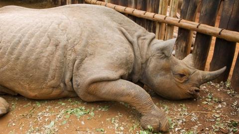 Zoo ist fassungslos: Besucher ritzen ihren Namen in den Rücken eines Nashorns