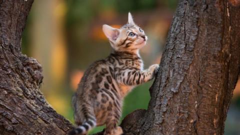 Das ist die jüngste Katzenrasse der Welt