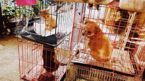 Darum solltet ihr keine Tiere aus der Zoohandlung erwerben