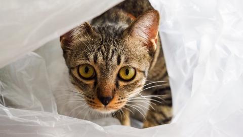 Kätzchen in einer Plastiktüte gefunden: Erst zuhause merkt die Frau, in welchem Zustand es ist!