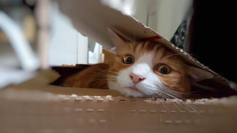 Frau hört lautes Miauen: Dann sieht sie, was die Katze die ganze Nacht lang im Karton bewacht hat!