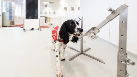 80%-Trefferquote: So könnten uns Spürhunde bald im Kampf gegen das Coronavirus unterstützen