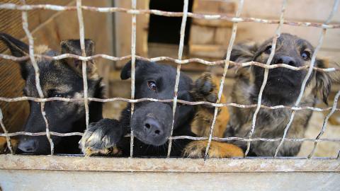 Endlich: Erste Provinzen in Kambodscha verbieten Verzehr von Hundefleisch