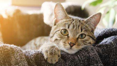 Welche Katzenrasse passt am besten zu dir?