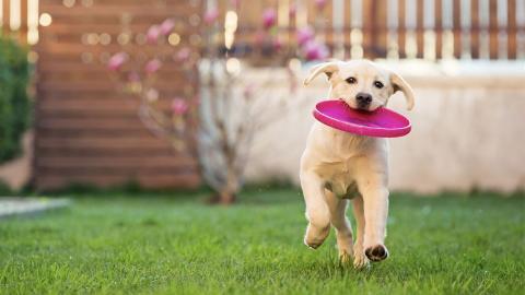Diese fünf Hunderassen sind besonders verspielt