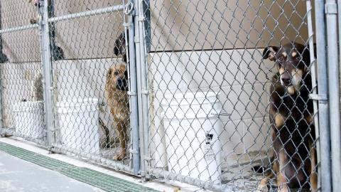 Journalist schreibt Bericht über Tierheim: Was dort passiert, ändert sein Leben für immer