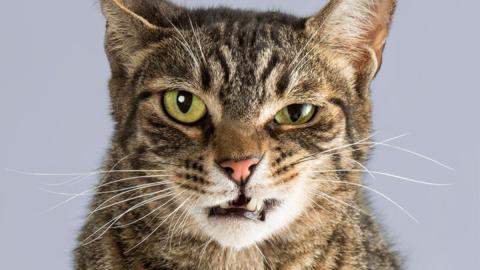 Unbehandelter Katzenbiss: Diese schlimmen Folgen kann er auf den Menschen haben