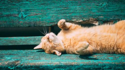 Sommerhitze: So schützt ihr eure Katze vor einem Hitzschlag