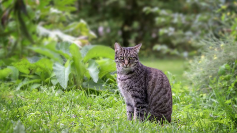 19-jährige Katze verirrt sich im Wald, doch die Besitzer reagieren völlig unerwartet