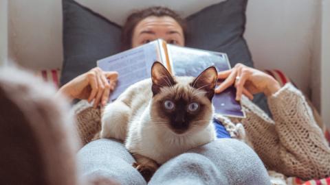 Haarige Geschichte: So wurde die Katze zum beliebtesten Haustier des Menschen!