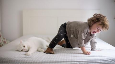 Junge überzeugt, dass Katze ihn töten will: Eltern glauben ihm nicht und dann ist es fast zu spät