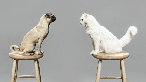 Haustiere: So funktioniert das Zusammenleben von Hund und Katze
