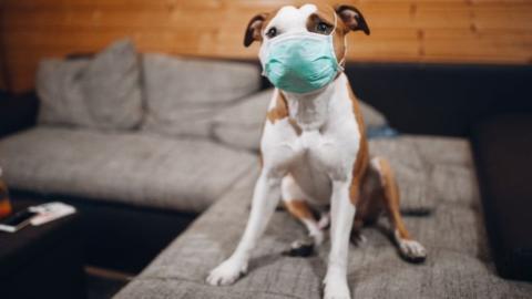 Notfallplan wegen Corona: So sorgst du für dein Haustier vor für den Fall der Fälle