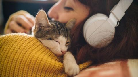 Es sieht nach harmlosem Kuscheln aus, aber in Wahrheit möchte die Katze etwas Besonderes sagen!