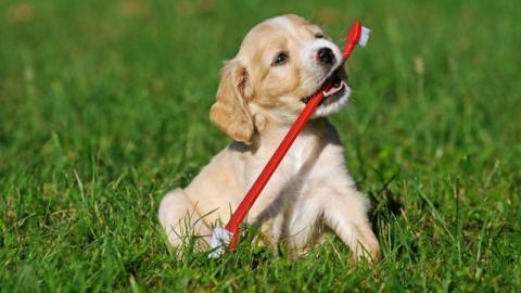 Früh übt sich: So bringst du deinem Hund die richtige Zahnpflege bei
